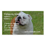 Big Bulldog Pack Of Standard Business Cards