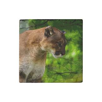 Big Cat Cougar Puma Wildlife Photo Portrait 4 Stone Magnet