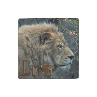 Big Cat Male African Lion Wildlife Photo Stone Magnet
