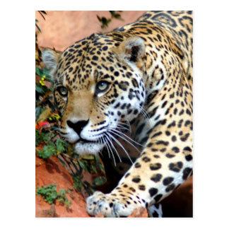 Big Cats - 10 Postcard