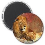 Big Cats - 6 Fridge Magnet