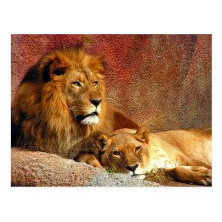 Big Cats - 6 Postcard