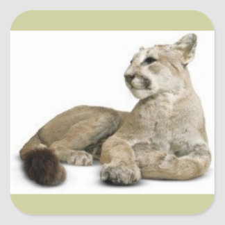 BIG CATS WILD WILDLIFE NATURE CAUSES ANIMALS STICKERS