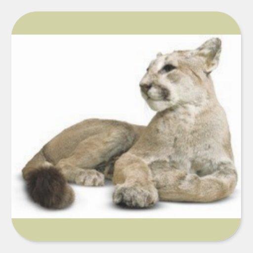 BIG CATS WILD WILDLIFE NATURE CAUSES ANIMALS STICKERS
