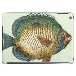 Big Colorful Fish