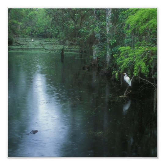 Big Cypress National Preserve Spring Rain Poster
