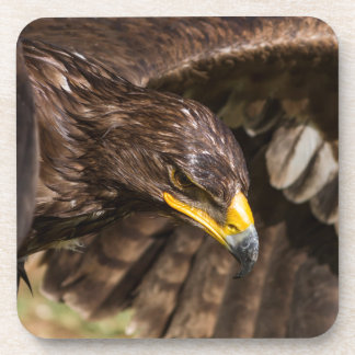big eagle coaster