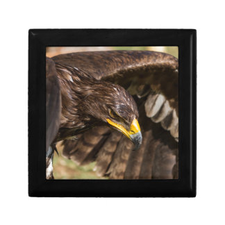 big eagle gift box