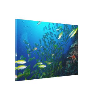 Big Eye Snapper on the Great Barrier Reef Canvas Print