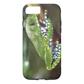 Big Eye Treefrog, Leptopelis vermiculatus, iPhone 8/7 Case
