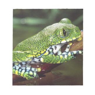 Big Eye Treefrog, Leptopelis vermiculatus, Notepad