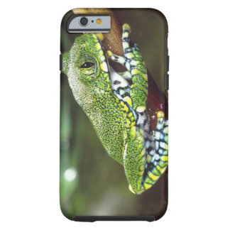 Big Eye Treefrog, Leptopelis vermiculatus, Tough iPhone 6 Case