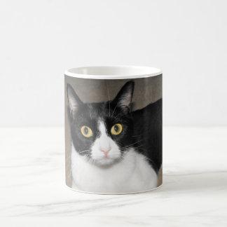 big eyed black and white cat basic white mug