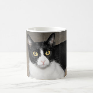 big eyed black and white cat coffee mugs