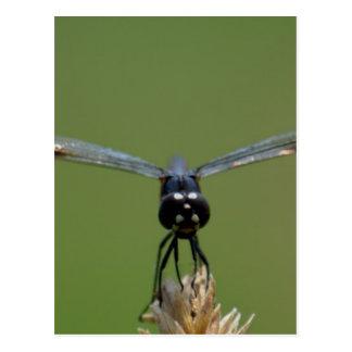 Big Eyed Dragonfly Postcard