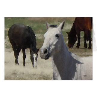 Big Eyes Pretty Little Gray Grey Pony Herd   Blank Card