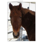 Big Eyes Red Tennessee Walking Horse -  TWH Blank