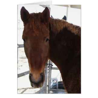 Big Eyes Red Tennessee Walking Horse -  TWH Blank Card