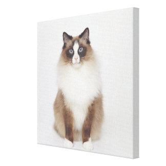 Big Furry Cat Gallery Wrap Canvas
