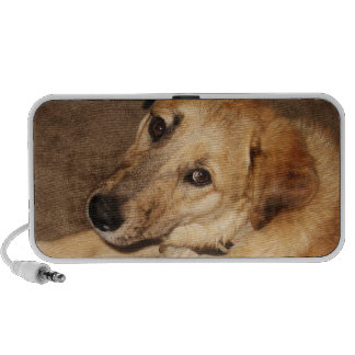 Big Golden Retriever Puppy - Ranch Dog Lover Portable Speakers