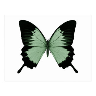 Big Green & Black Butterfly Postcard
