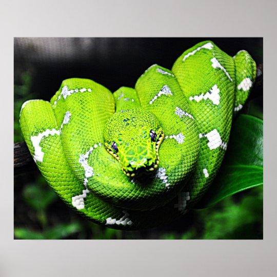 Big green boa snake canvas poster
