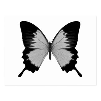 Big Grey & Black Butterfly Postcard