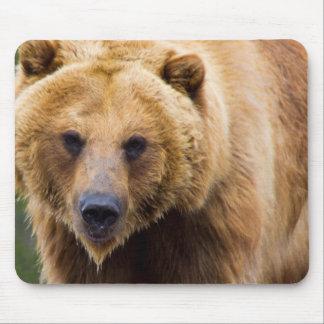 Big Grizzly Bear Close Enough Mouse Mat