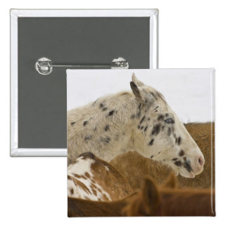 Big Horn Mountains, Horses in The Snow 15 Cm Square Badge