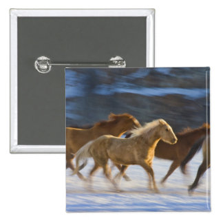 Big Horn Mountains, Horses running in the snow 2 15 Cm Square Badge