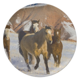 Big Horn Mountains, Horses running in the snow 3 Party Plate