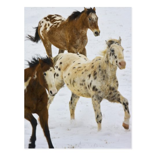 Big Horn Mountains, Horses running in the snow