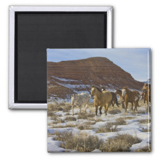 Big Horn Mountains, Horses Running in The Snow Magnet