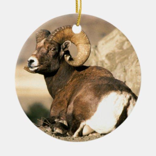 Big Horn Ram, Part of the American Mammal Series Christmas Ornaments
