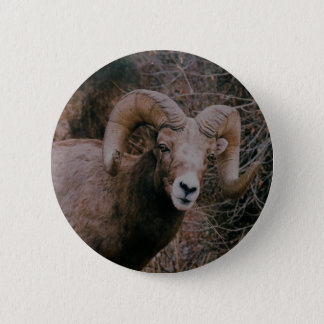 Big Horn Sheep 6 Cm Round Badge