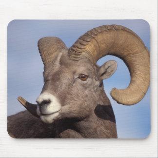 big horn sheep, mountain sheep, Ovis canadensis, Mouse Mat
