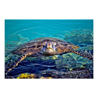 Big Island Sea Turtle Poster