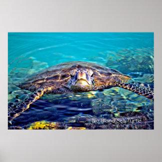 Big Island Sea Turtle Poster