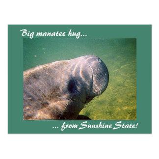Big Manatee Hug from Sunshine State - FL postcard