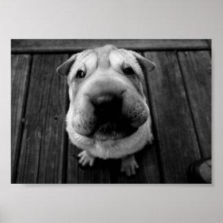 Big Nose Pup Posters