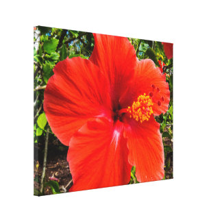 Big Orange/Red Hibiscus Macro Canvas Print