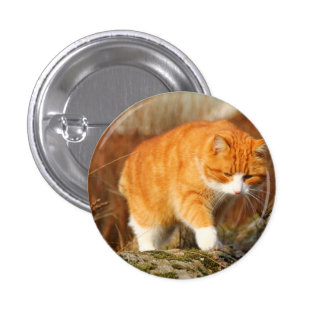 Big Orange Tom Cat on the Prowl 3 Cm Round Badge