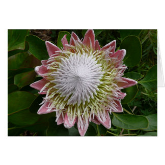 Big Pink and White Flower Greeting Card