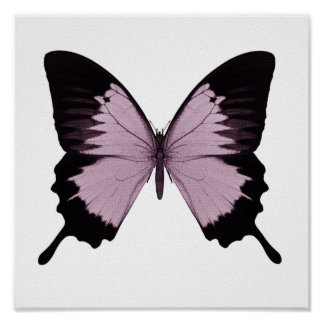 Big Pink & Black Butterfly - Personalize Poster