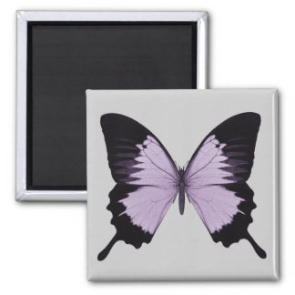 Big Purple & Black Butterfly Square Magnet