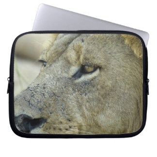 Big Red is a magnificent male Lion residing in Laptop Sleeve