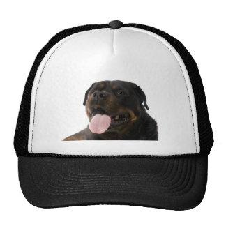 big rottweiler cap