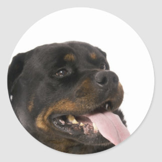 big rottweiler classic round sticker