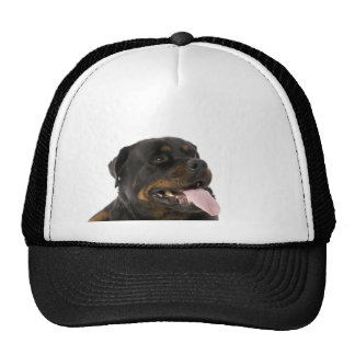 big rottweiler hats