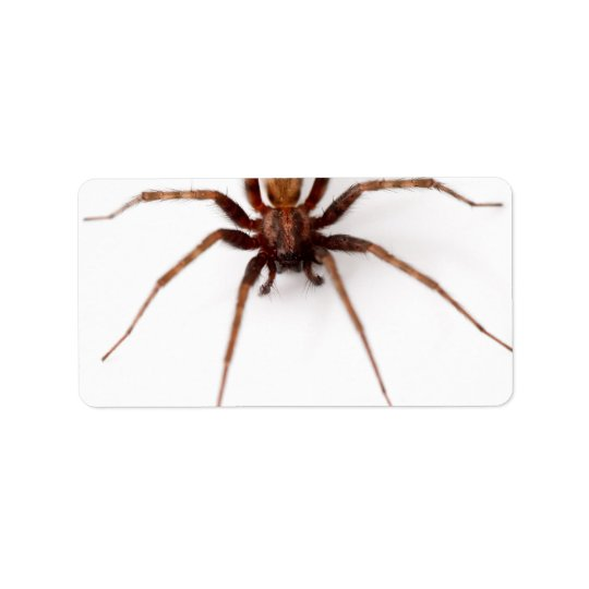 Big Scary Spider Address Label